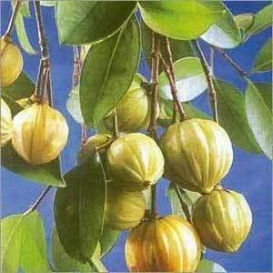 Garcinia Cambogia Fruit