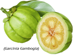 garcinia extract fruit